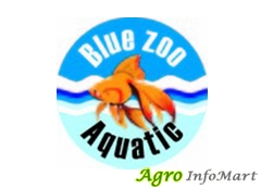 Blue Zoo Aquatic