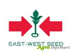 East West Seed India