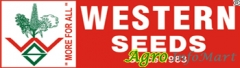 western agri seeds ltd