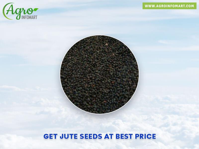 Jute Seeds Manufacturers Suppliers Exporters Amp Wholesalers