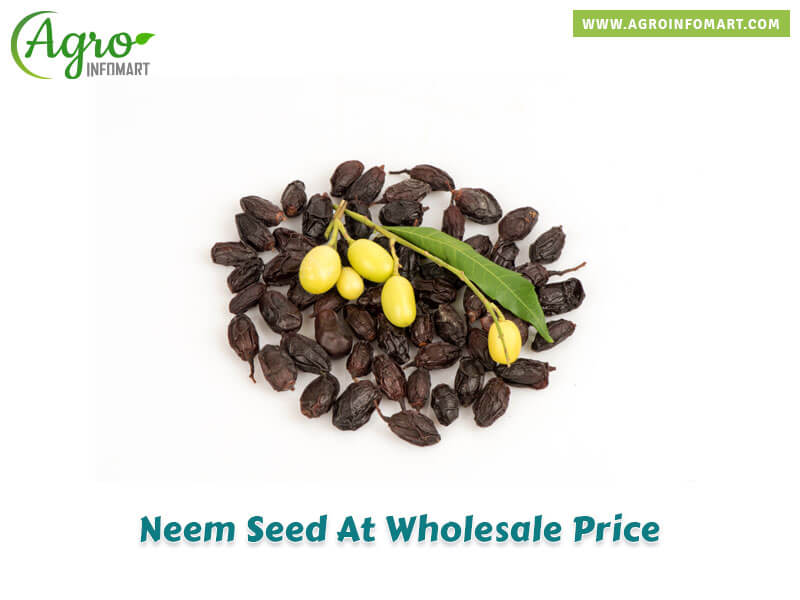 Neem Seed Manufacturers Suppliers Traders Amp Wholesalers