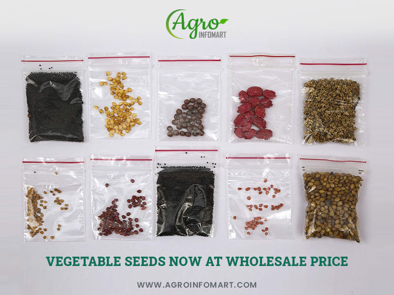 Vegetable Seeds Manufacturers Wholesalers And Exporters