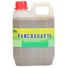 panchagavya fertilizer